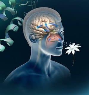 Uyku Terapisi – Uyku Esnasında Hafıza İle Oynama